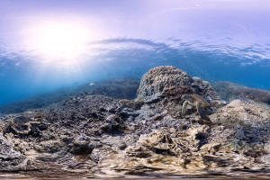 Heron Island Australia is among the world's coral reef ecosystems most threatened by warming waters and increased ocean acidity. If reefs collapse, so too may the shoreline economies that rely on them. (Photo by: Catlin Seaview Survey)