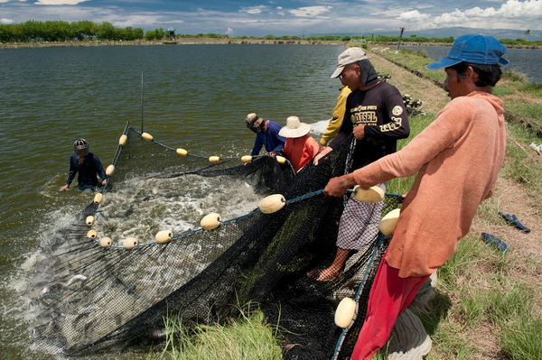 Low Footprint Seafood in the Coral Triangle