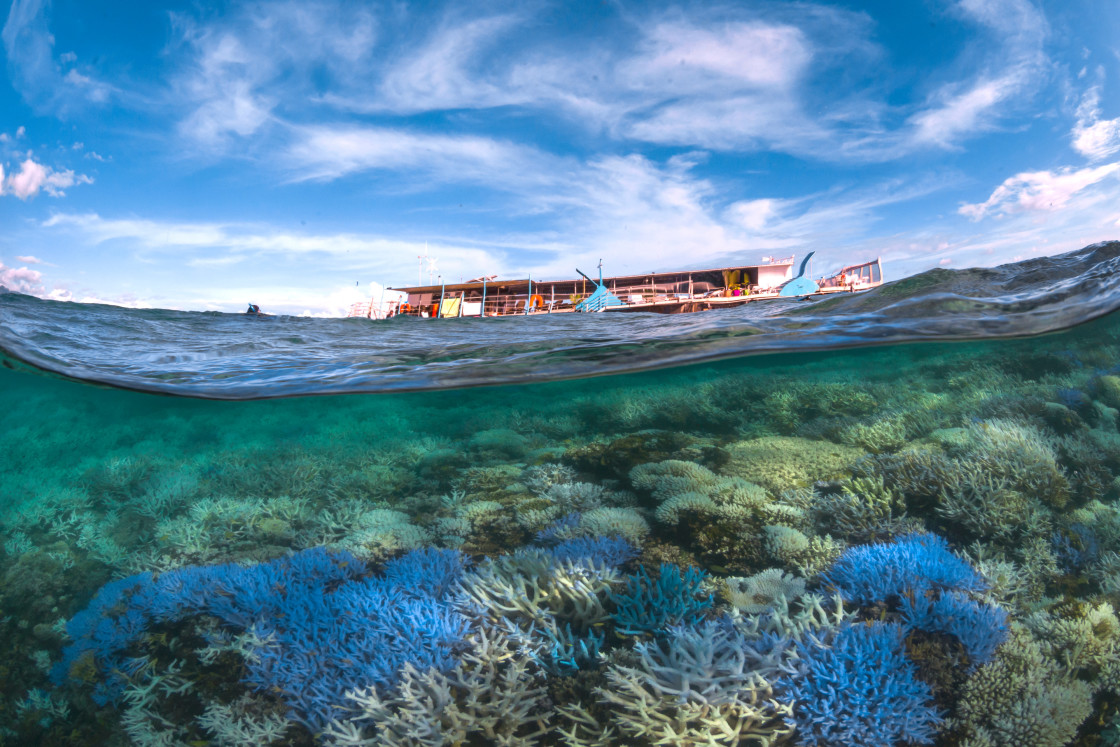 A Global Plan to Save Coral Reefs from Extinction