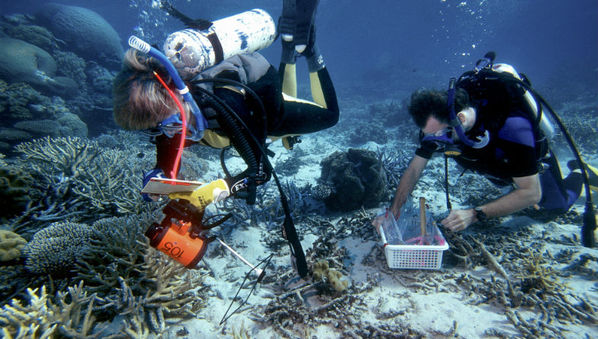 Marine Protected Areas Attract Coral-Eating Predators