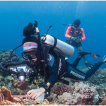 Dea Licuanan works to identify a vulnerable coral species in Anilao. (Photo by: Yasmeen Smalley-Norman)